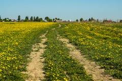 Los dientes de león amarillean el camino de campo del cielo azul del verano del campo de flores Imágenes de archivo libres de regalías