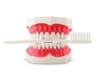 Los dientes modelan con el cepillo de dientes Imágenes de archivo libres de regalías