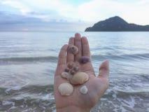 Los diversos tipos de cáscaras y de abundancia en la playa del sombrero imagen de archivo