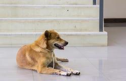 Los dueños rojos del perro esperan el frente solitario de la escalera Fotografía de archivo libre de regalías