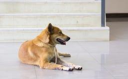 Los dueños rojos del perro esperan el frente solitario de la escalera Imagen de archivo