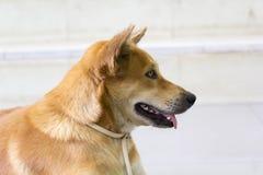Los dueños rojos del perro esperan el frente solitario de la escalera Imagen de archivo libre de regalías