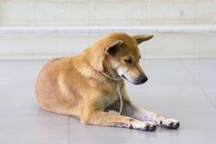 Los dueños rojos del perro esperan el frente solitario de la escalera Fotografía de archivo