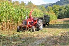 Los E.E.U.U., Vermont: Maíz de Vermont del borrachín del corte Imagen de archivo