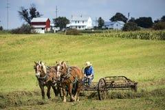 LOS E.E.U.U. - Ohio - Amish fotografía de archivo