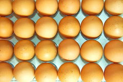 Los Eier in Folge, Plan Lizenzfreies Stockbild