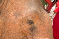 Los elefantes en el lampang de Tailandia Imagenes de archivo