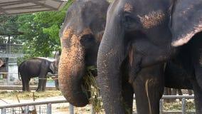 Los elefantes en el parque zoológico con un carro en la parte posterior están comiendo tailandia asia metrajes