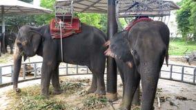 Los elefantes en el parque zoológico con un carro en la parte posterior están comiendo tailandia asia almacen de metraje de vídeo