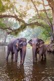 Los elefantes en Kanchanaburi, Tailandia Imagenes de archivo