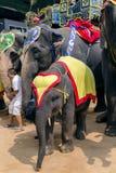 Los elefantes en la arena del teatro en Nong Nooch cultivan un huerto Fotos de archivo libres de regalías