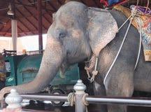 Los elefantes lindos hermosos en los jardines cultivan al aire libre fotografía de archivo libre de regalías