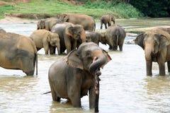 Los elefantes toman un baño Fotos de archivo