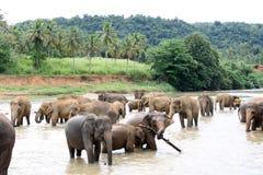 Los elefantes toman un baño Imagenes de archivo