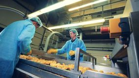 Los empleados de la fábrica están cortando las patatas almacen de video