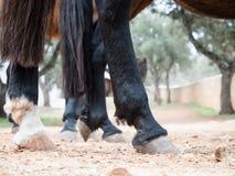 Los enganches del caballo se cierran para arriba Imagenes de archivo