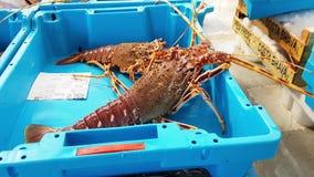 Los envases cogen las delicadezas de los pescados de mar, langoustines almacen de video