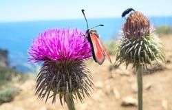 Los escarabajos se sientan en una flor Fotos de archivo libres de regalías