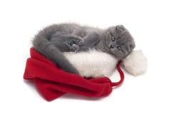 Los escoceses de la Navidad plegable el gatito Fotografía de archivo