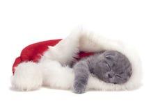 Los escoceses de la Navidad plegable el gatito Fotografía de archivo libre de regalías