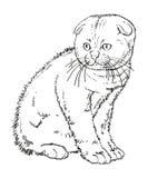Los escoceses podan el dibujo espigado del gatito Imagen de archivo libre de regalías