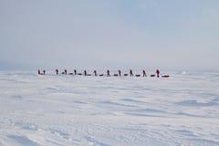 Los esquiadores van al Polo Norte del campo ruso del hielo Imagenes de archivo