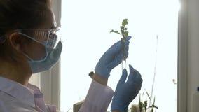 Los experimentos genéticos, científico trabajan con la cultura experimental del verdor en el laboratorio en la iluminación viva metrajes