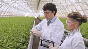 Los expertos toman los tubos verdes de la muestra en invernadero industrial almacen de metraje de vídeo
