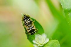 Los ficheros o la flor de la fruta clasifía en naturaleza verde Imagen de archivo