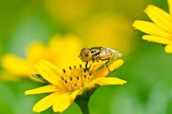 Los ficheros o la flor de la fruta clasifía en naturaleza verde Fotos de archivo