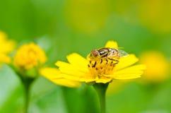 Los ficheros o la flor de la fruta clasifía en naturaleza verde Imagen de archivo libre de regalías