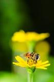 Los ficheros o la flor de la fruta clasifía macro en naturaleza verde Fotos de archivo libres de regalías