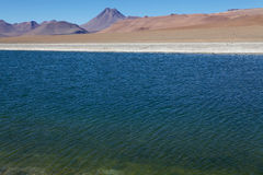 Los Flamenco's Nationale Reserve, Chili Royalty-vrije Stock Foto