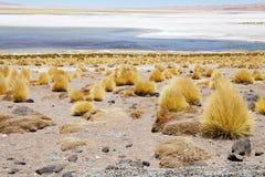 Los Flamenco's Nationale Reserve, Chili Royalty-vrije Stock Fotografie