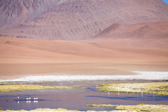 Los Flamencos National Reserve, Chile. Salar de Tara and Aguas Caliente landscape in the Los Flamencos National Reserve, Chile. This area is made up of two salt Stock Photos