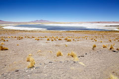 Los Flamencos National Reserve, Chile. Salar de Tara and Aguas Caliente landscape in the Los Flamencos National Reserve, Chile. This area is made up of two salt Royalty Free Stock Photography