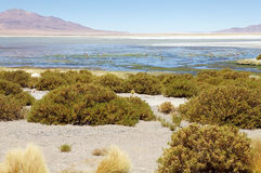 Los Flamencos National Reserve, Chile. Salar de Tara and Aguas Caliente landscape in the Los Flamencos National Reserve, Chile. This area is made up of two salt Royalty Free Stock Photo