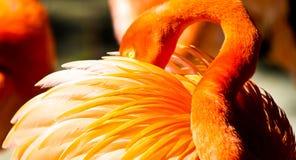 Flamenco en el parque zoológico de San Diego Imágenes de archivo libres de regalías