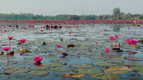 Los flores Fotos de archivo libres de regalías
