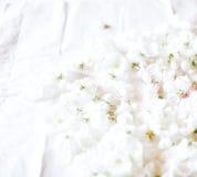Los flores recogidos para el primer secado del té de la flor Imagenes de archivo