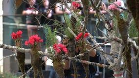 Los floristas profesionales toman medidas florales durante el festival florístico almacen de video