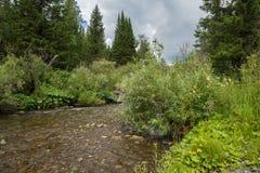 Los flujos de corriente de la montaña en el taiga, en medio de la vegetación enorme Fotografía de archivo