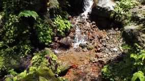 Los flujos de la primavera en junglen imagen de archivo libre de regalías