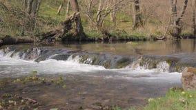 Los flujos del río de la montaña sobre el umbral almacen de video