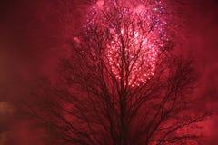 Los fuegos artificiales rojos y el árbol oscuro fotos de archivo