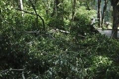 Los fuertes vientos golpearon sobre árboles, abajo del pasillo Imagenes de archivo