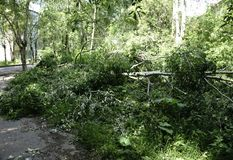 Los fuertes vientos rompieron árboles en dos y golpearon abajo líneas eléctricas Imágenes de archivo libres de regalías