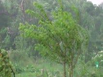 Los fuertes vientos y la lluvia sacudieron los árboles tormenta suburbana del verano asustadizo serbia almacen de video