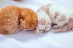 Los gatitos en el piso blanco foto de archivo libre de regalías