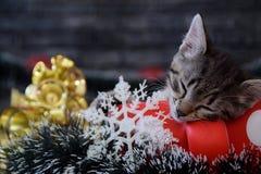 Los gatitos lindos están durmiendo entre las decoraciones del ` s del Año Nuevo Foto de archivo